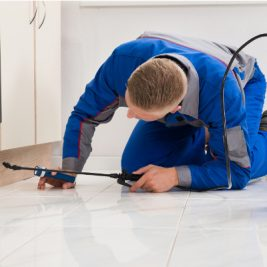 Ace Termite and Pest Solutions offer termite treatments Caloundra and termite inspections Caloundra