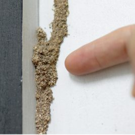 Option 3, a termite barrier, is one of many solutions offered by Ace Termite and Pest Solutions