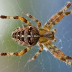 Treat your insect infestations, including spiders, with treatment option and services from Ace Termite and Pest Solutions