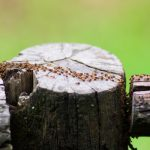 Eradicate termites with many treatment options available from Ace Termite and Pest Solutions